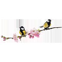 Muurstickers vogels op een tak