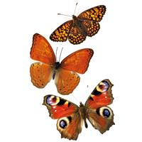 Vlinders stickers