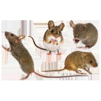 Muizen stickers