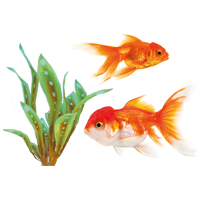 Muurstickers vissen