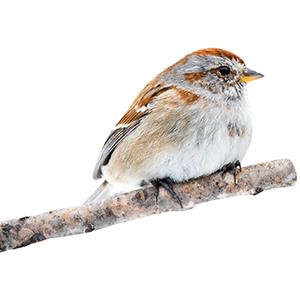 Sticker vogel op tak