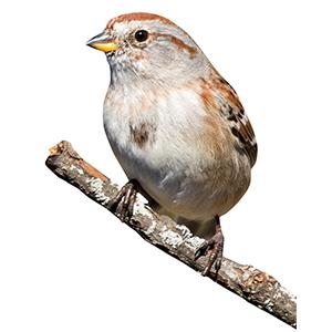 Vogel op tak sticker
