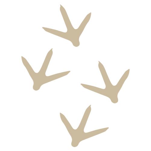 Vogel pootafdruk stickers