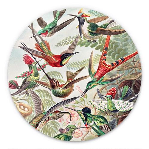 Wanddecoratie Kolibries | Ernst Haeckel